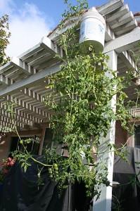 Full plant - August 9, 2009